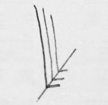 Svenny logo ontwerp schets
